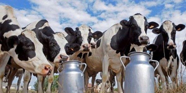 2015 mlijeko dukat