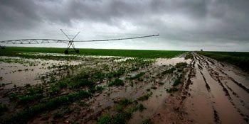 poplava kukuruz