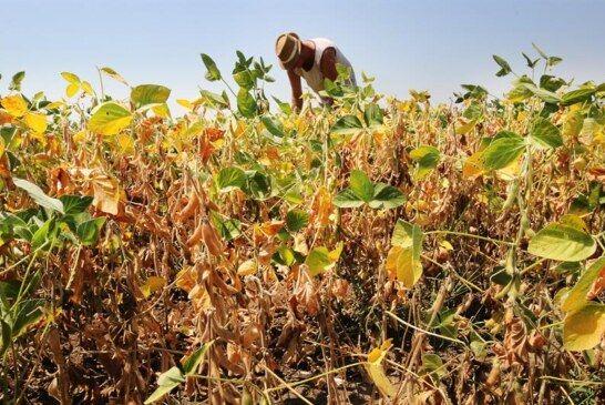 Čazma – Obavijest o mogućnosti prijave štete od suše