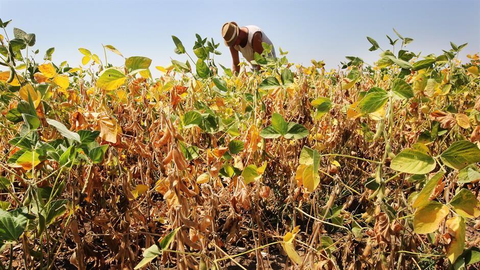 Čazma - Obavijest o mogućnosti prijave štete od suše