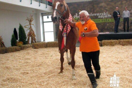 """Dodijeljene nagrade najboljim konjima pasmine """"Gidran"""""""
