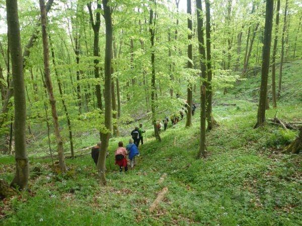 Na stazi u šumi