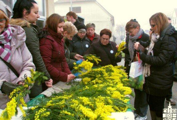 U Bjelovaru obilježen 11. Dan mimoza i Nacionalni dan borbe protiv raka vrata maternice
