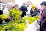11. Hrvatski dan mimoza – Nacionalni dan borbe protiv raka vrata maternice