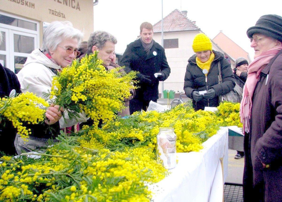 11. Hrvatski dan mimoza - Nacionalni dan borbe protiv raka vrata maternice