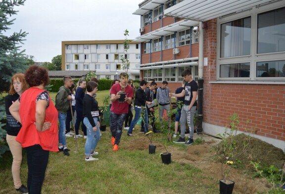 Zahvaljujući vrijednim učenicima i profesorima, Komercijalna i trgovačka škola Bjelovar ima vlastiti školski voćnjak