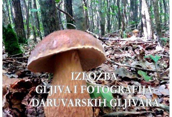 Izložba gljiva u Daruvaru