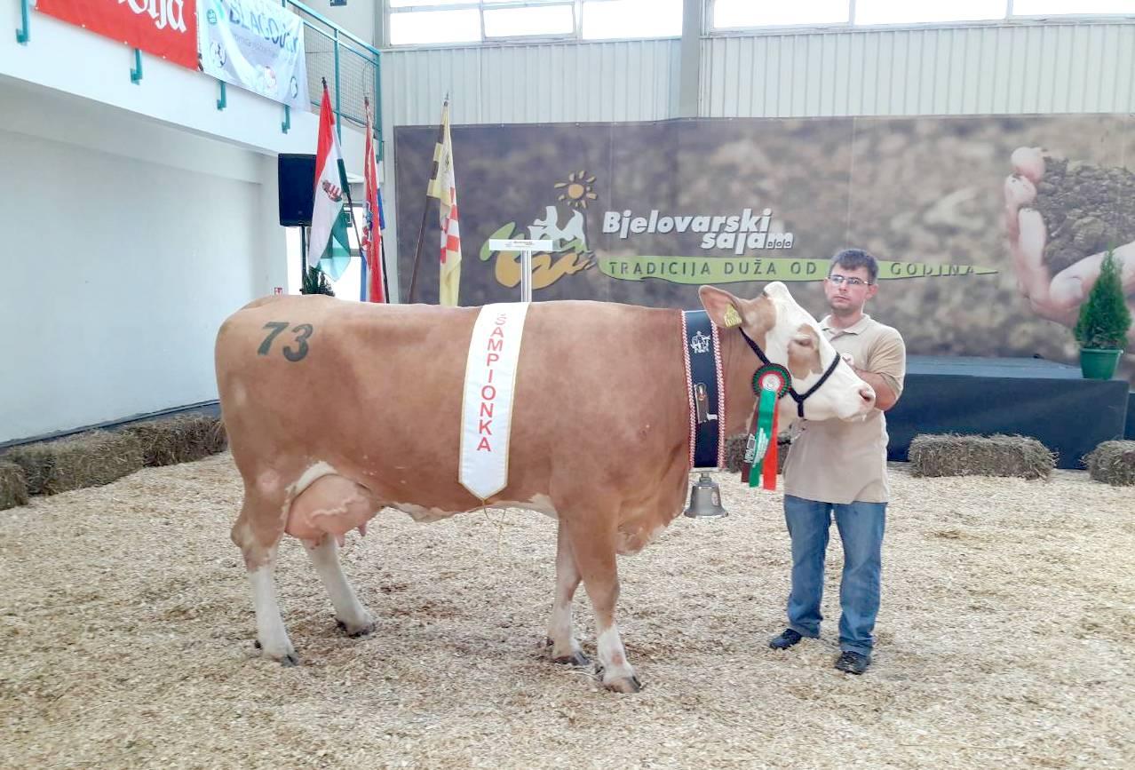 26. Državna stočarska izložba na Jesenskom bjelovarskom sajmu: titulu šampionke osvojila krava Dalia vlasnika OPG-a Imbrišić