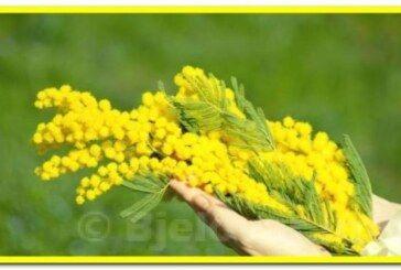 12. Hrvatski dan mimoza – Nacionalni dan borbe protiv raka vrata maternice