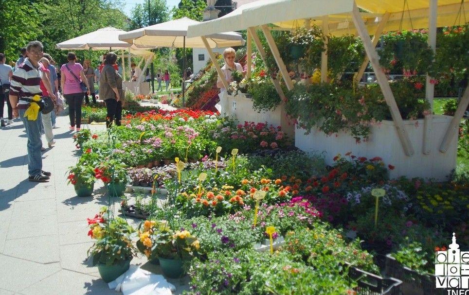 Grad Bjelovar: Javni poziv za sudjelovanje na Sajmu cvijeća, ukrasnog bilja i sadnica Bjelovar