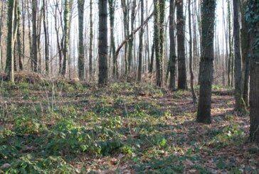 Županija: Zabrana lova u državnom otvorenom lovištu Krivaja