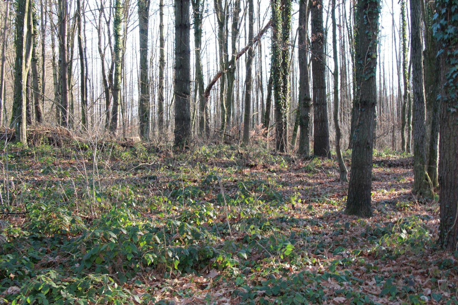 """Nastavlja se zabrana lova srne obične u zajedničkom otvorenom lovištu """"Đulovac-Klisa"""""""