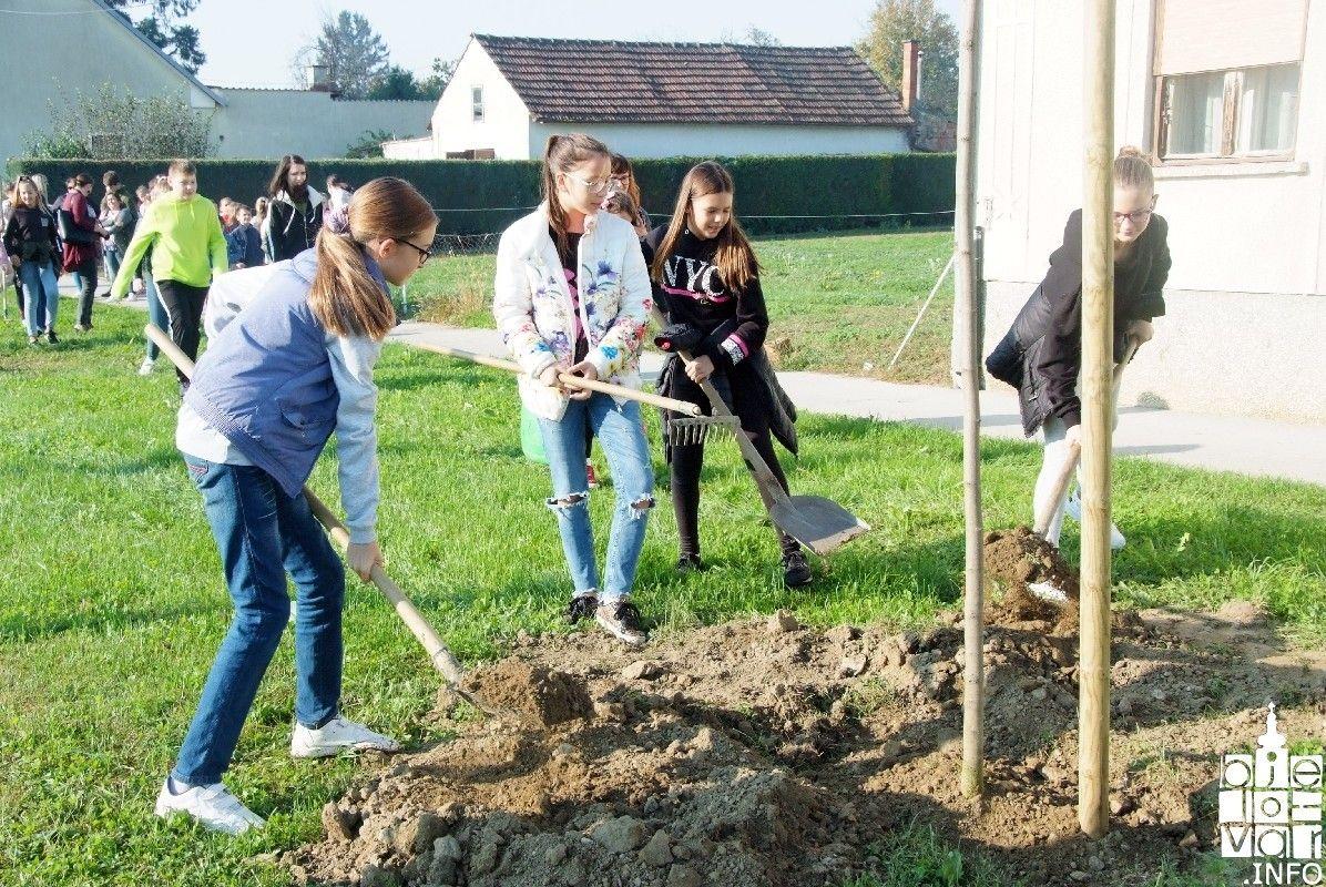 2019_bjelovar-_info_bjelovar_drveće_15