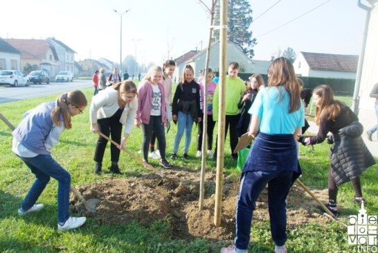 """Hvalevrijedna akcija """"Dani kolektivne sadnje drveća"""" održana i u Bjelovaru: POSAĐENO 59 STABALA"""