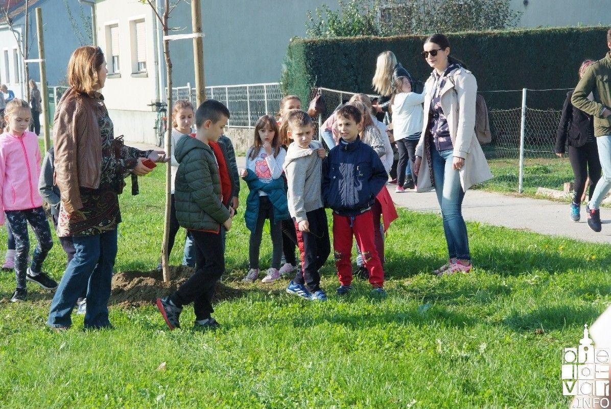 2019_bjelovar-_info_bjelovar_drveće_27