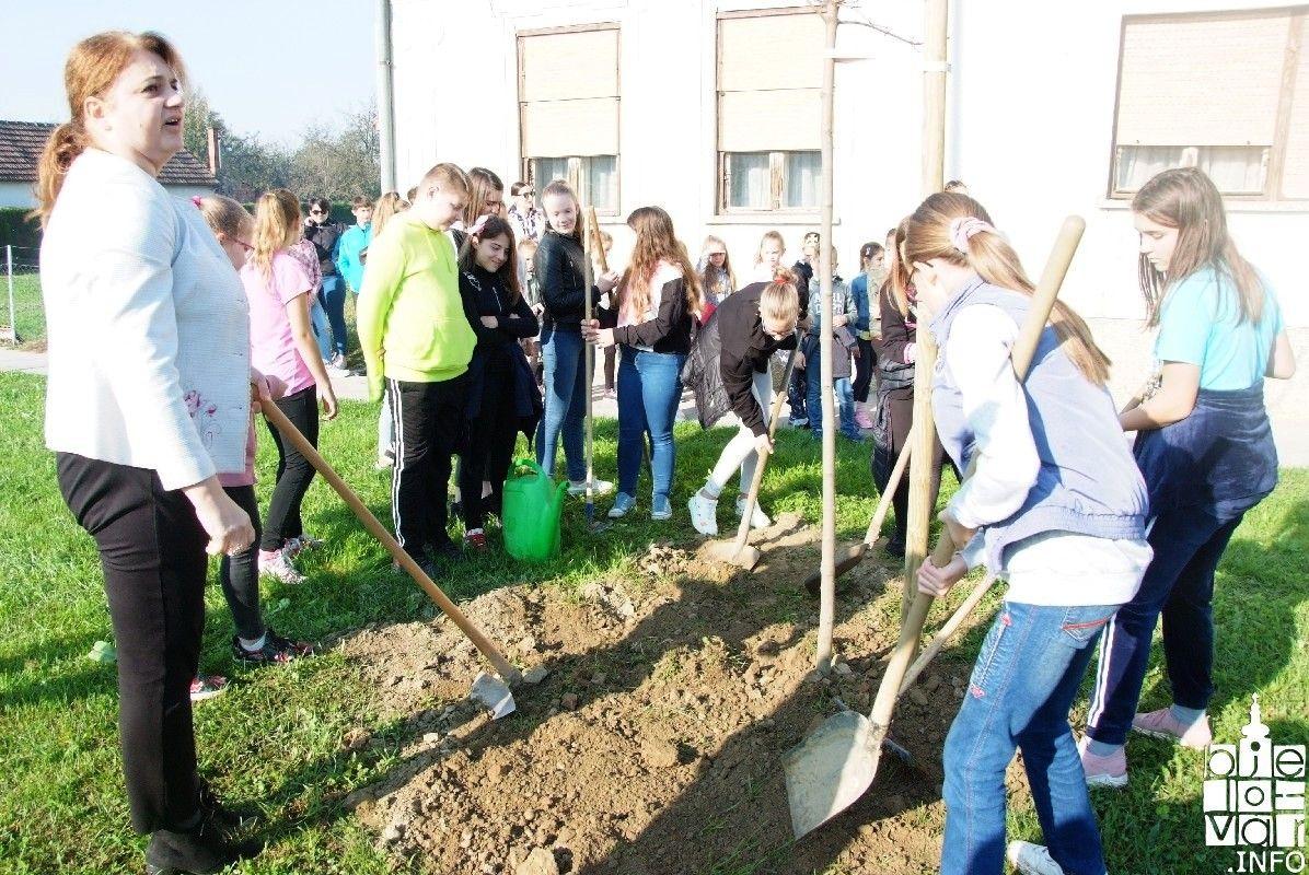 2019_bjelovar-_info_bjelovar_drveće_31