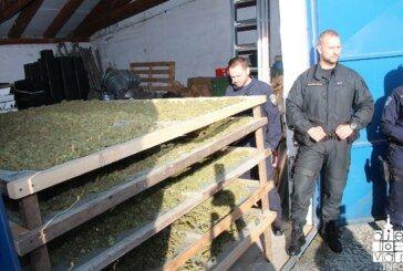 (FOTO) Policijska uprava bjelovarsko-bilogorska: Zaplijenjena droga vrijedna milijun kuna