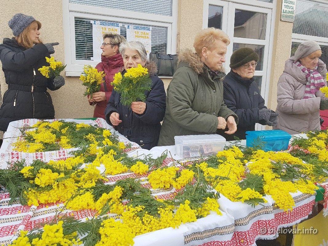 Hrvatski dan mimoza: Bjelovarčani podržali humanitarnu akciju u borbi protiv raka vrata maternice - Godišnje oboli oko 300 žena