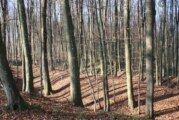 NESREĆA NA RADU:  U šumi nedaleko od Grubišnog Polja stradao 22-godišnjak