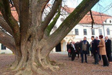 (FOTO) GLASAJTE za našeg zaljubljenog GINKA – kandidata za europsko stablo godine