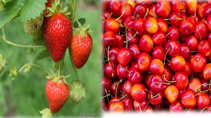 Od 9. svibnja u Bjelovaru počinju Dani jagoda i trešanja – Proizvođači, prijavite se i sudjelujte