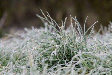 Župan Damir Bajs proglasio prirodnu nepogodu zbog mraza za područje Grada Bjelovara