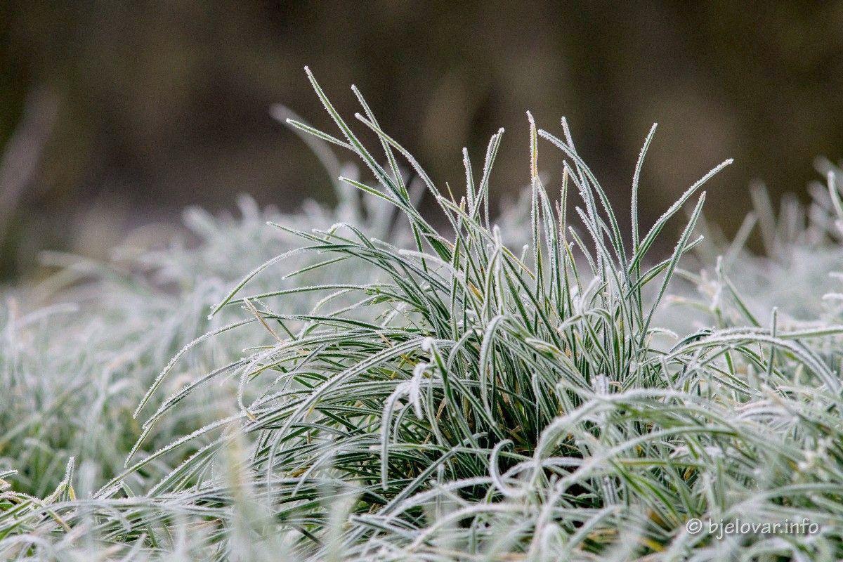 Župan Bajs proglasio prirodnu nepogodu zbog mraza na području Općine Dežanovac, Hercegovac, Sirač i Rovišće
