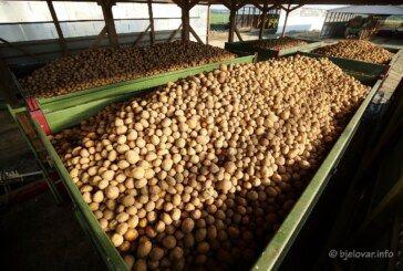 DOMAĆI KRUMPIR za proizvodnju čipsa u Hercegovcu – Intersnack Adria ove godine otkupljuje čak 19 tisuća tona krumpira lokalnih proizvođača