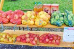 BJELOVAR obilježava Svjetski dan jabuka – Ovo najzdravije voće možete kupiti sutra na bjelovarskom korzu