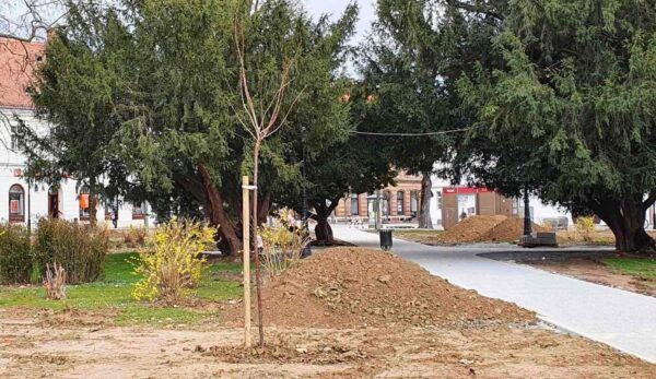 Grad Bjelovar sadnja drveca 2