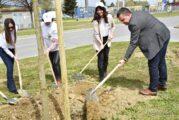 Grad Bjelovar nastavlja sa sadnjom stabala - Zasađeno 1180 sadnica u suradnji s tvrtkom Kronospan