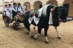 Terezijana - Održana smotra konjskih zaprega 'Nek krenu konji gizdavi'