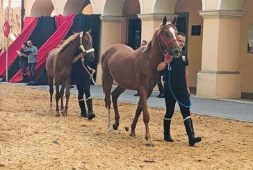 Dani Gidrana na Terezijani - 3. međunarodna izložba gidran konja