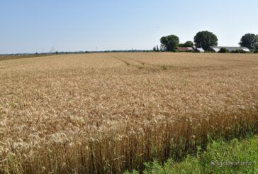 Protuzakonito postupanje prilikom objave JAVNOG NATJEČAJA za prodaju poljoprivrednog državnog zemljišta