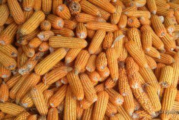 Ministarstvo poljoprivrede: Povećanje izvoza poljoprivrednih i prehrambenih proizvoda za 16 % u 2021. godini