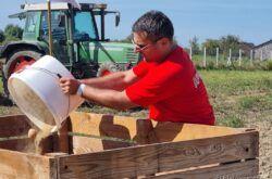 HERCEGOVAC – Najveći otkupljivač industrijskog krumpira nastavlja s povećanjem otkupa s hrvatskih polja